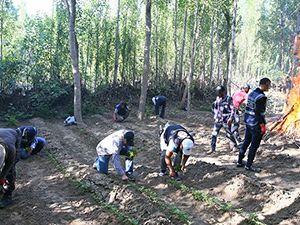 UNESCO ve PKK'nin kontrolünde olan Hevsel Bahçeleri'ne operasy