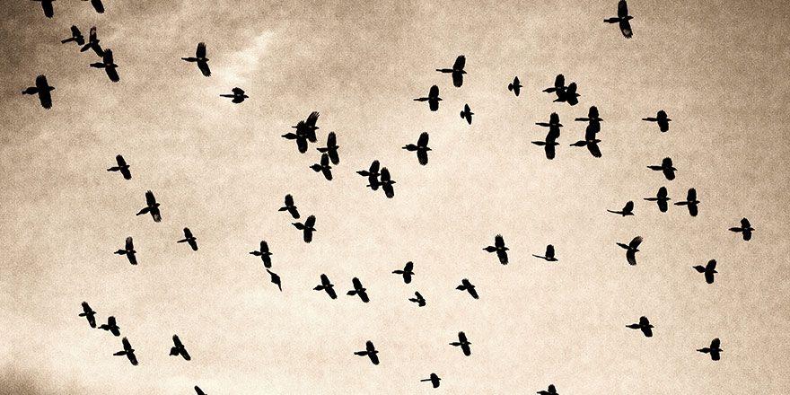 Yuva yapan kuşların görüntüleri