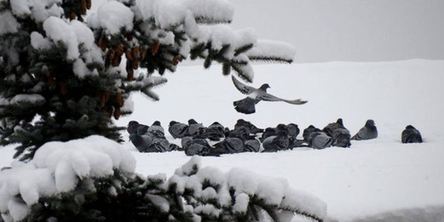 Kars'ta yağan kar güzel görüntülere sahne oldu