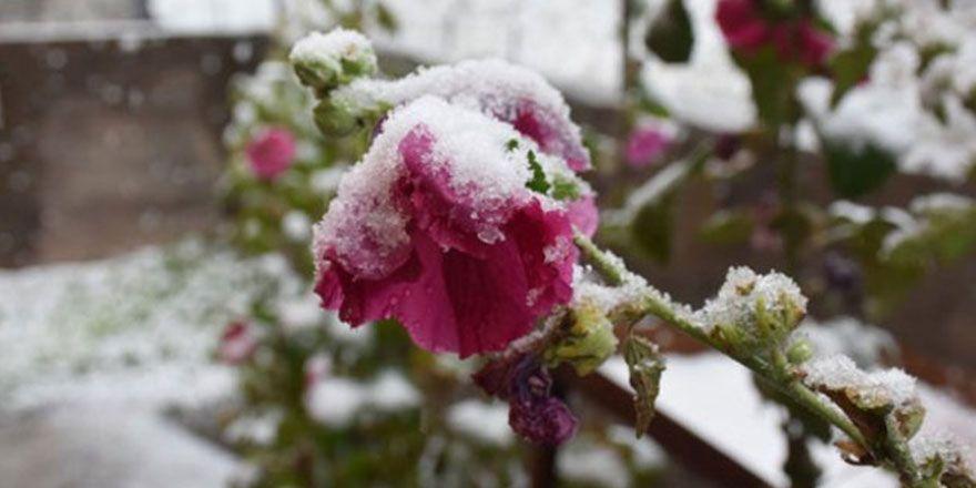 Ardahan ve Van'dan yılın ilk kar görüntüleri