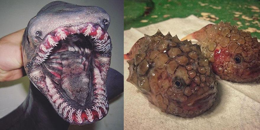 Denizden çıkan ilginç canlıların görüntüleri 1