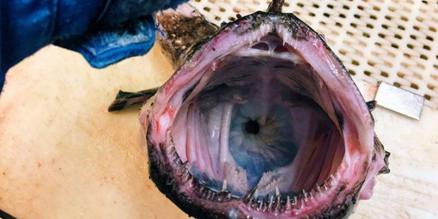 Denizden çıkan ilginç canlıların görüntüleri
