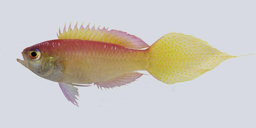 Dünya üzerinde keşfedilen 133 yeni canlı türü görüntüleri