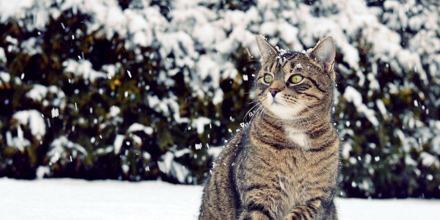 Doğu Karadeniz'den kış manzaraları