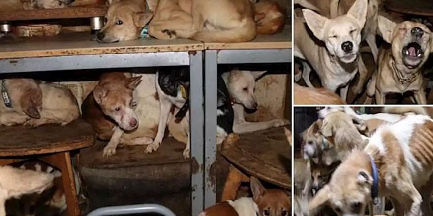 30 metrekarelik evde 146 köpekle yaşıyor!