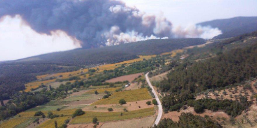 Gelibolu Yarımadası'nda orman yangını