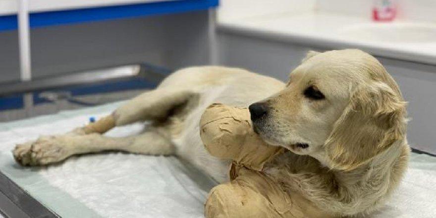 Bir köpeğin patilerini kesmenin cezası: 618 TL!