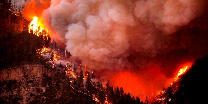 ABD'deki orman yangınlarında ölü sayısı 15'e yükseldi