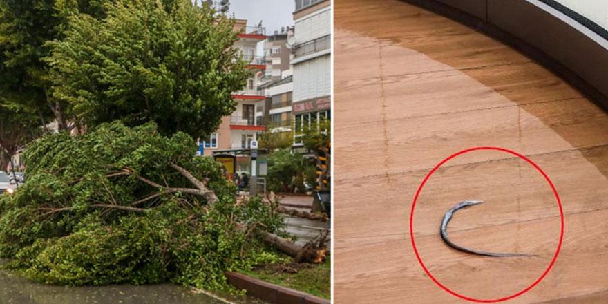 Antalya'da şiddetli fırtına, denizdeki balıkları evlerin balkonuna fırlattı