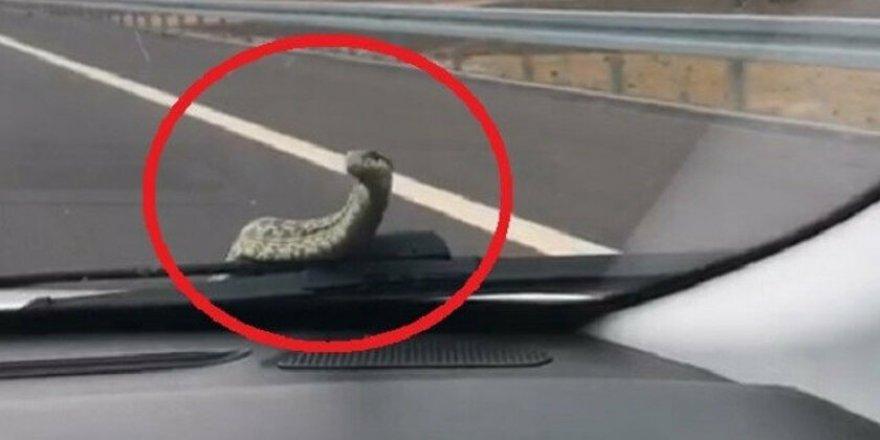 Arabayla seyahat eden baba oğula yılan da eşlik etti