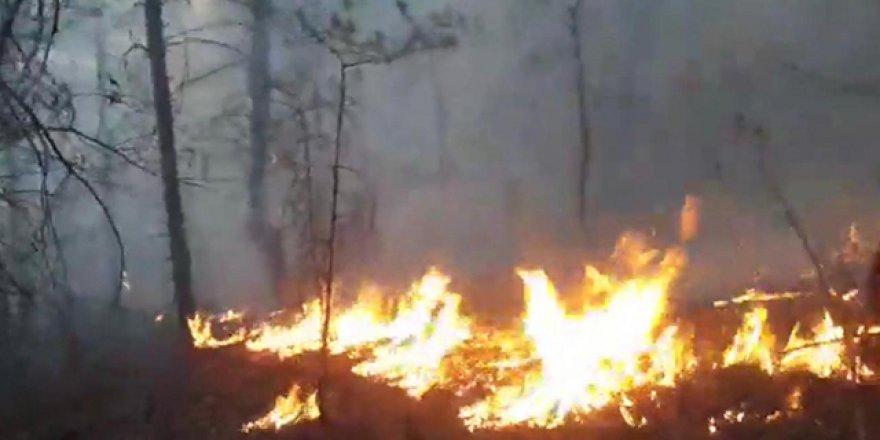 Artvin'in Borçka ilçesinde ormanlık alanda yangın!