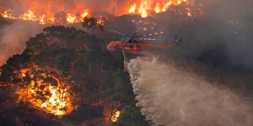 Avustralya'daki orman yangınlarından yaklaşık 3 milyar hayvan etkilendi