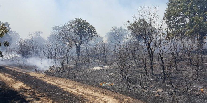 Çanakkale'de çıkan yangın korkuttu