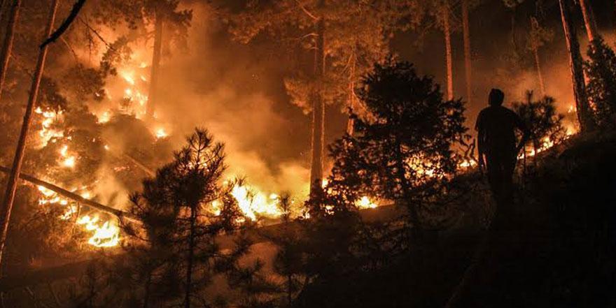 Doğu Karadeniz'de 71 noktada çıkan yangınlar sürüyor