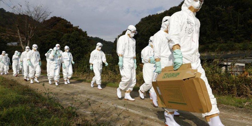 Japonya'da 2.5 milyon hayvan kuş gribi nedeniyle imha edildi