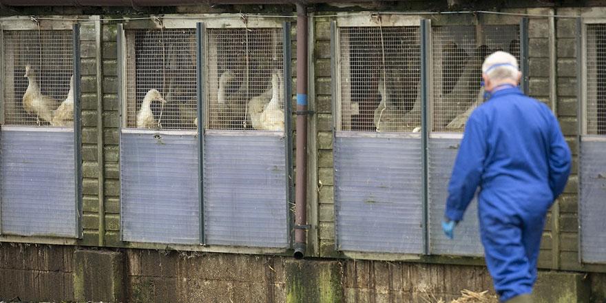 Kazakistan'da Rusya ile sınır 7 kentte kuş gribi tespit edildi