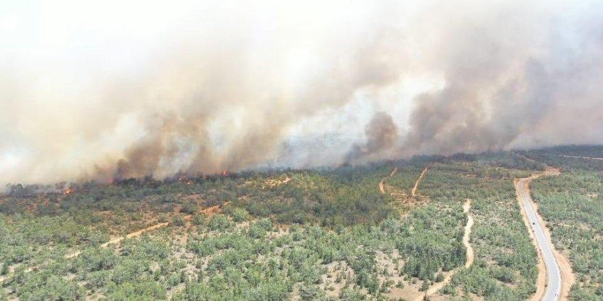 Kuzey Kıbrıs'ta büyük yangın!