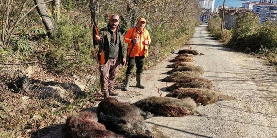 Ordu'da artan domuzlara karşı kaymakamlık avcılardan yardım istedi