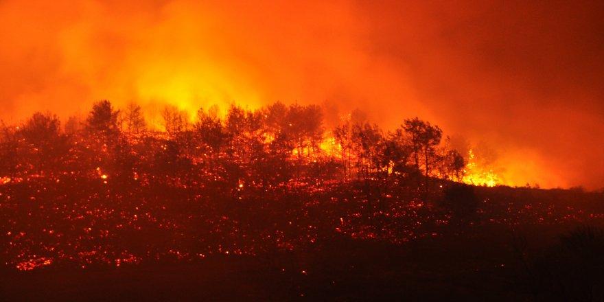 Orman yangınlarıyla ilgili korkunç iddia