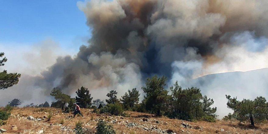 Pakdemirli: Menderes yangını kontrol altında, 1 gözaltı var