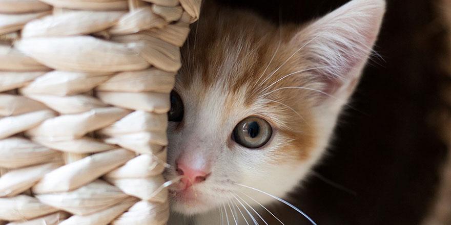 Shenzhen, Çin'de kedi-köpek etini yasaklayan ilk kent oldu