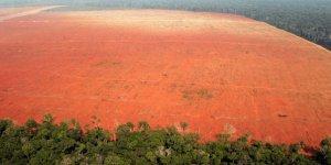 Pandemi döneminde orman katliamları yüzde 150 arttı.