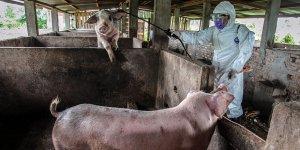 Uzmanlar yeni virüs tehlikesine karşı uyardı