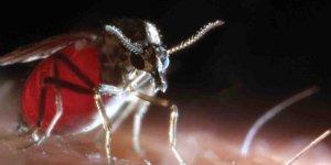 Adana ve çevre illerde 'kör eden' sinek tehlikesi