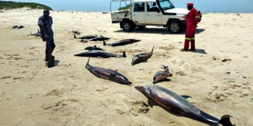 mozambik-sahilinde-111-olu-balina-bulundu-2-1614164789.jpg