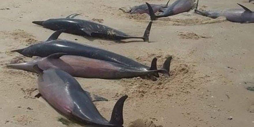 mozambik-sahilinde-111-olu-balina-bulundu-3.jpg